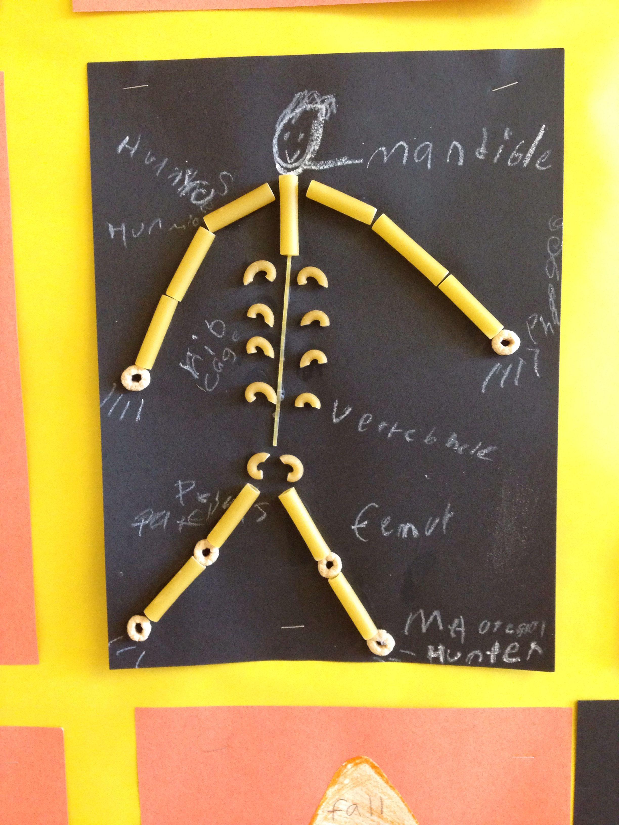 Bones In The Body Science Project 3rd Grade