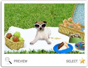 Gotcha Day Fun Dog Ecard