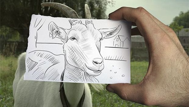 Line Drawing Of Sheep Face : Goat face drawing funny goats and