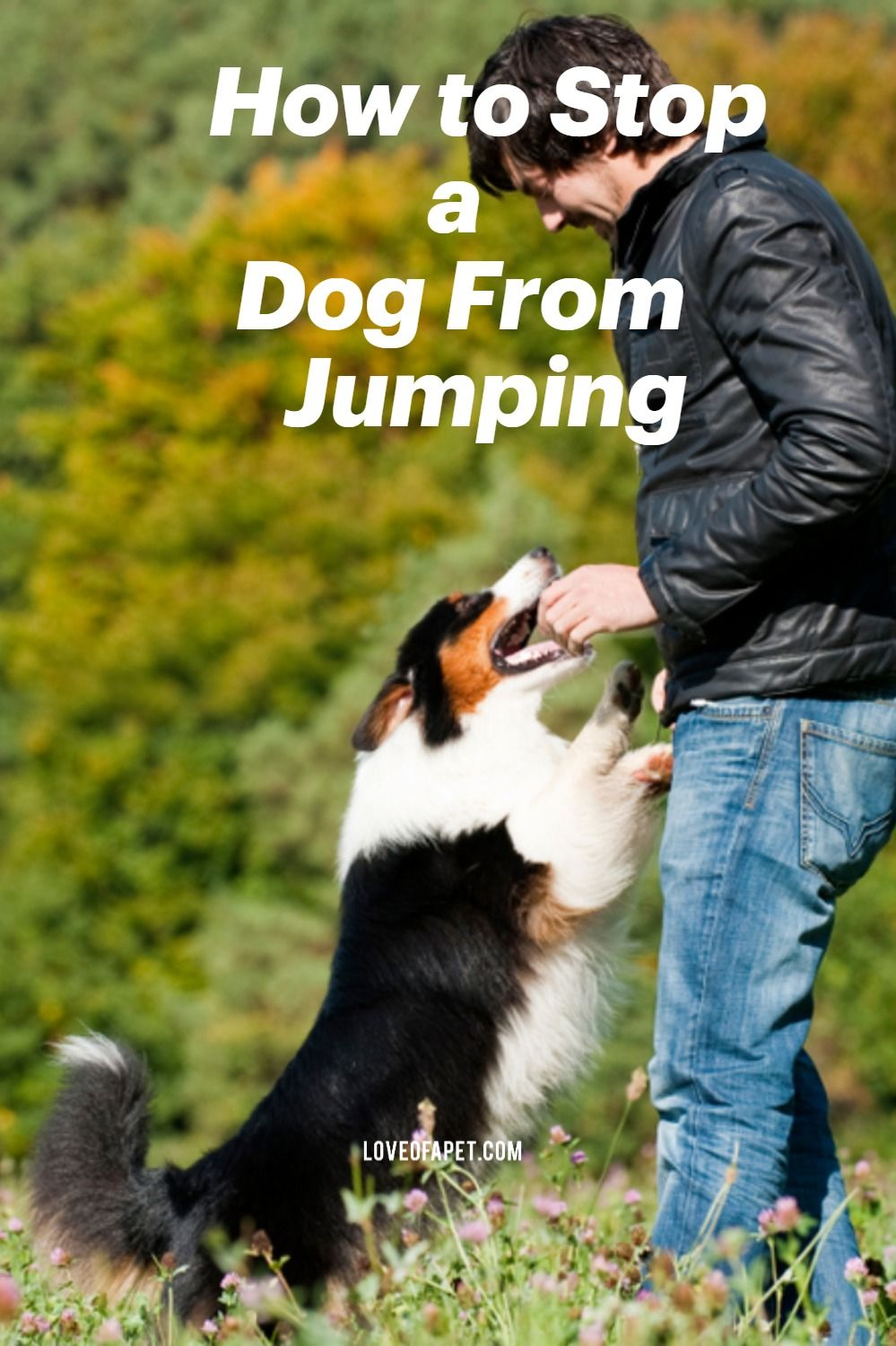 Basic guidance on how to stop a dog from jumping in 2020