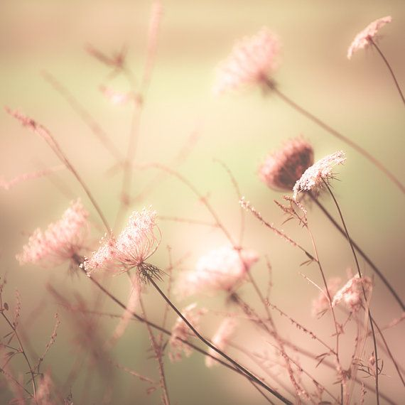 Spring decorating idea pale pinknature photography by bomobob, $30.00