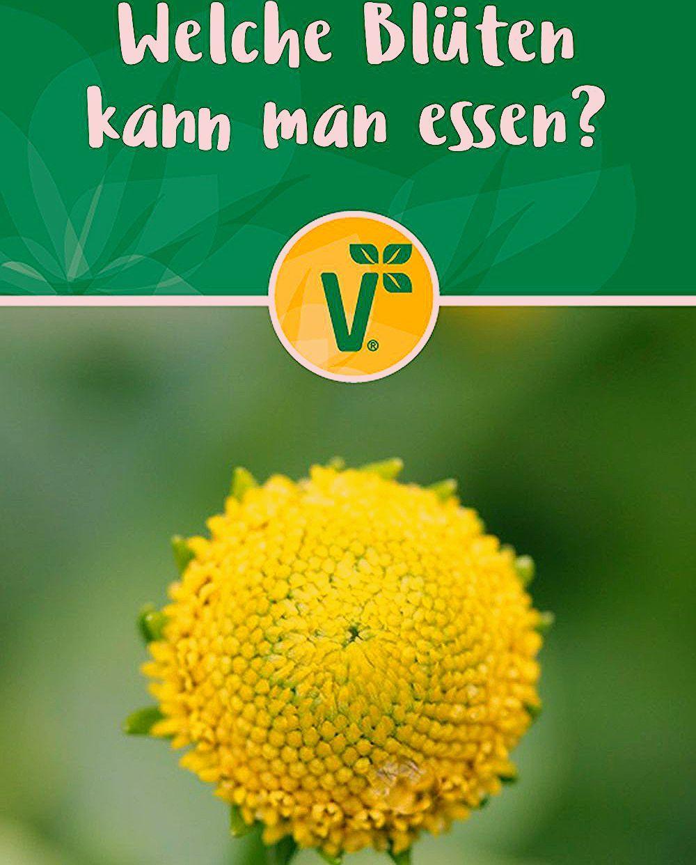Photo of Kräuterpflanzen: Welche Blüten  kann man essen?
