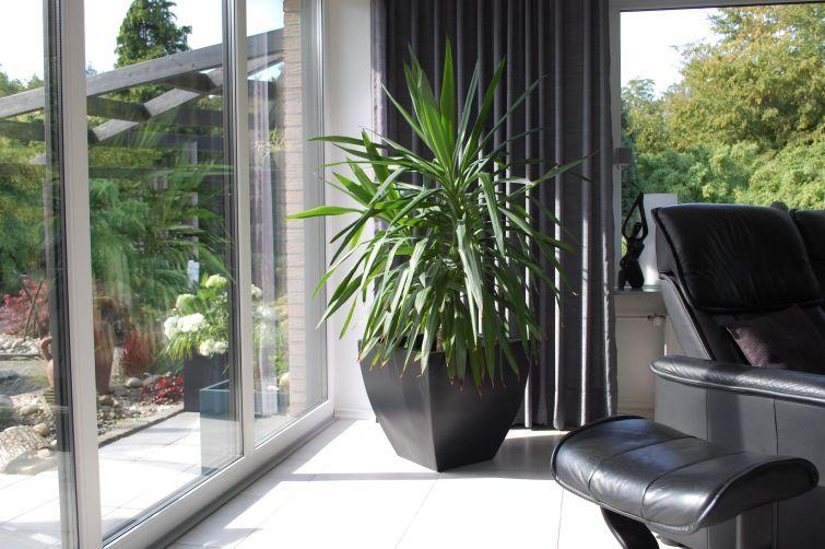 pflanzkübel / blumenkübel fiberglas in anthrazit mit palme im