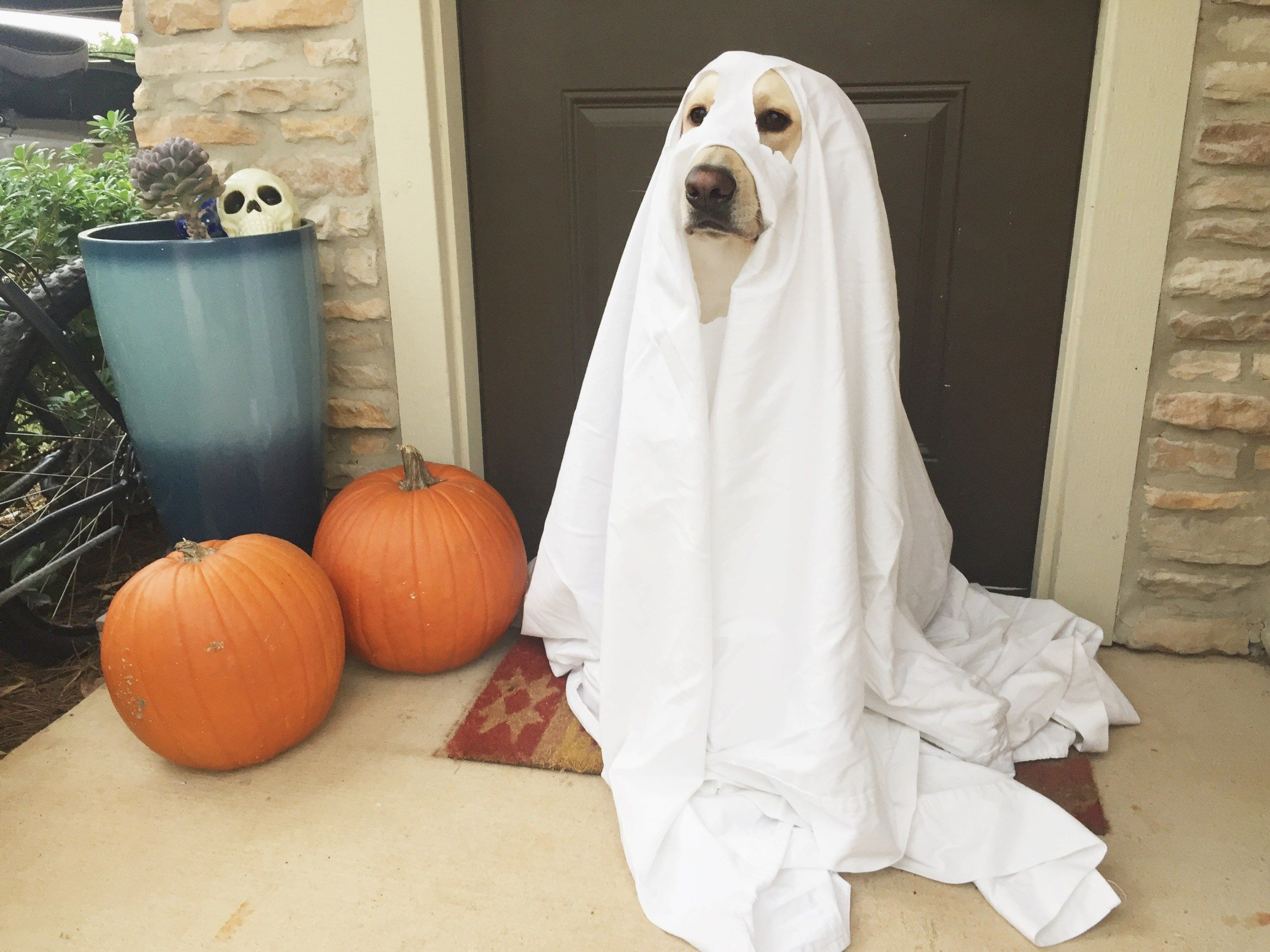 3 Couples Costumes For You And Your Dog Dog Ghost Costume Dog