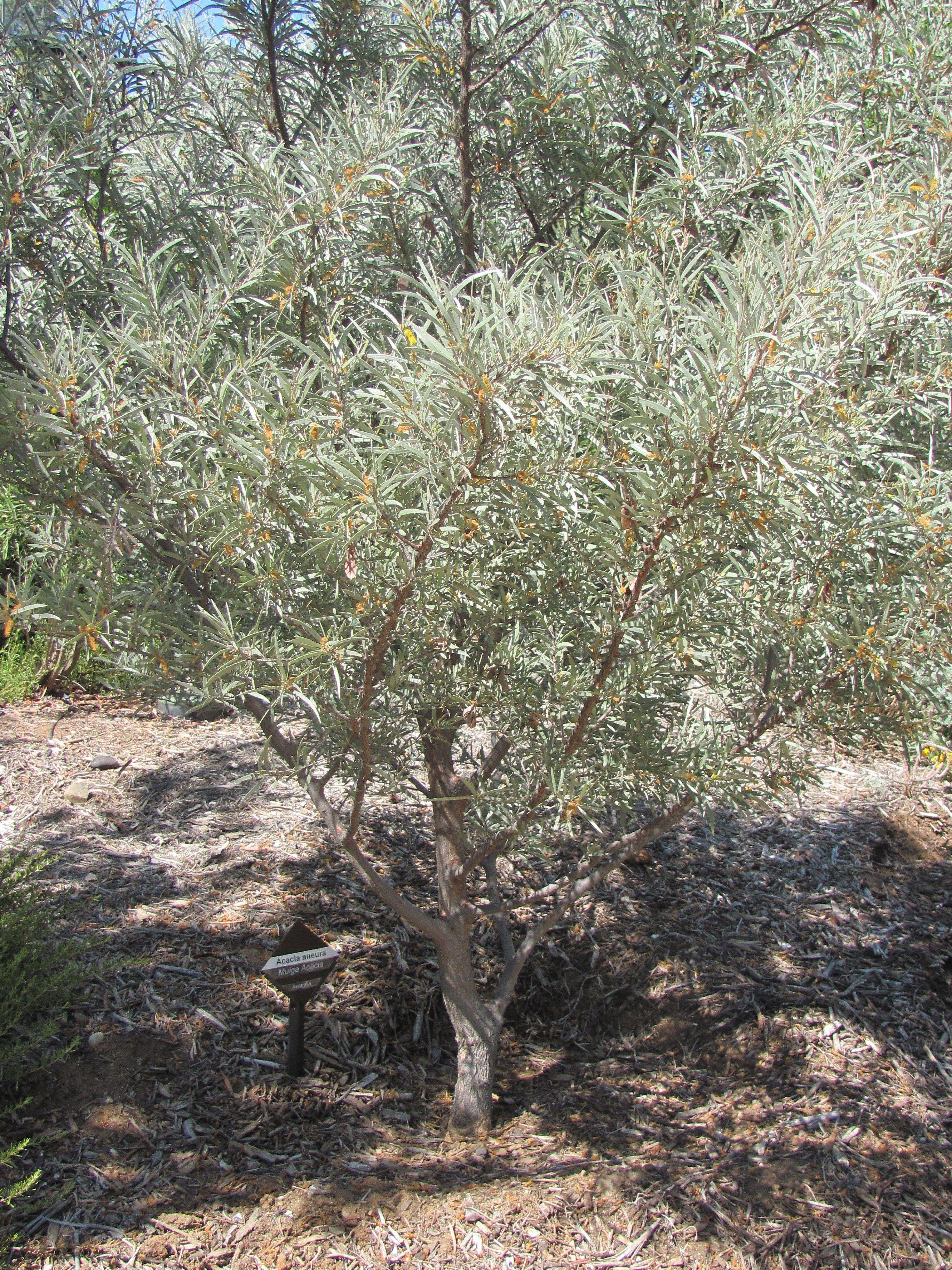 favorite drought-resistant plants