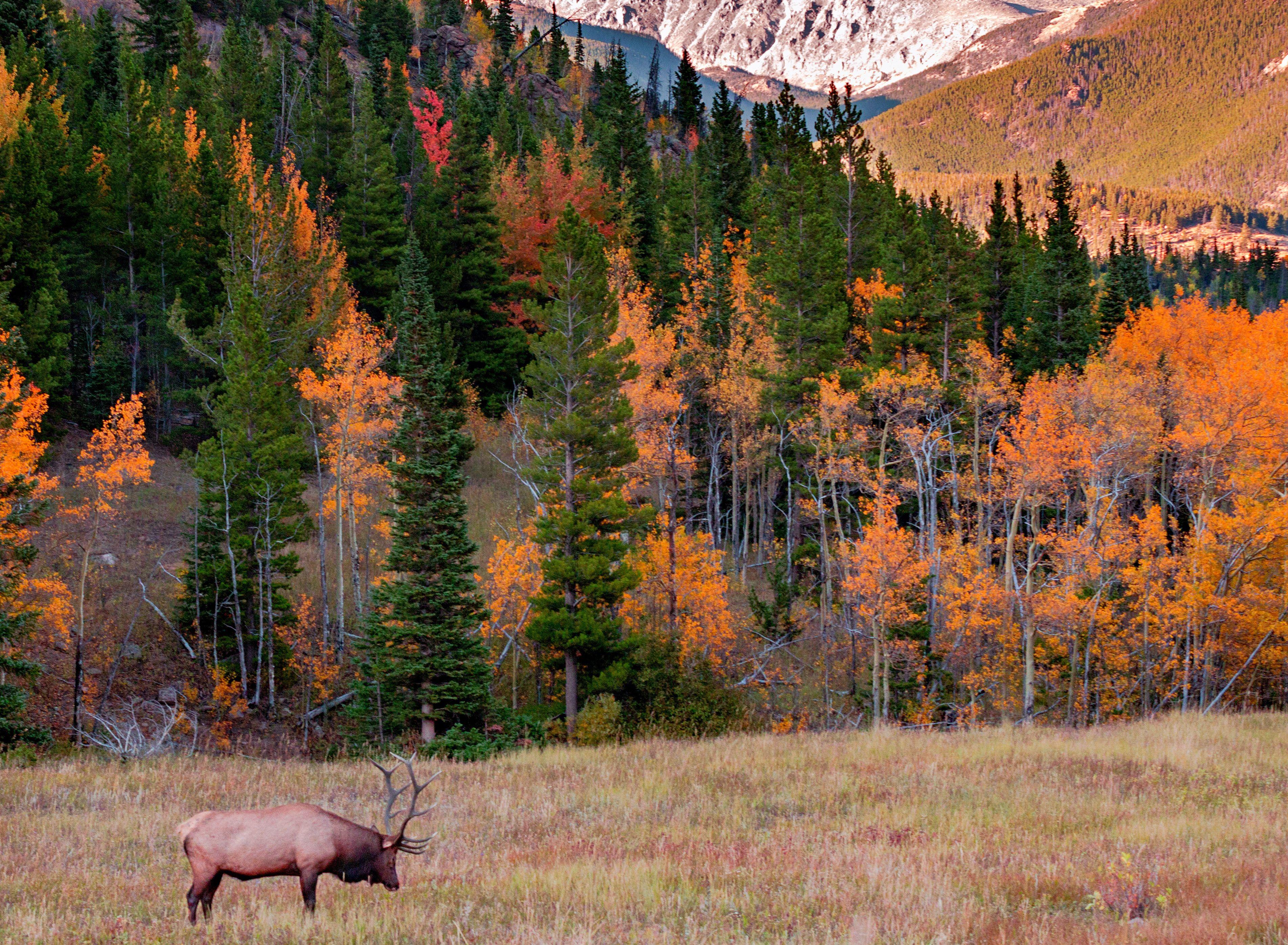 Elk At Rocky Mountain National Park Colorado Top Vacation Destinations Rocky Mountain National Park Sandboarding