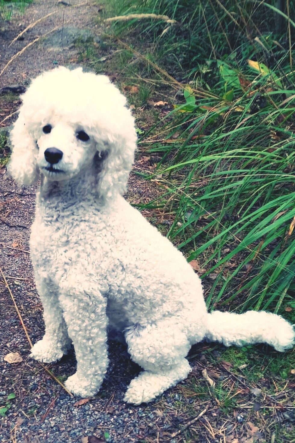 40 Best Medium Sized Dogs Best Medium Sized Dogs Dogs Dog Spay