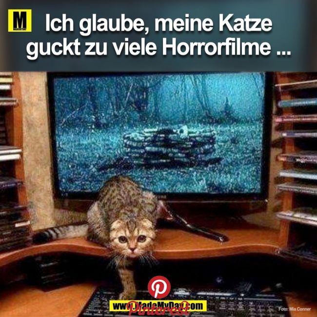 Horrorfilme Tiere