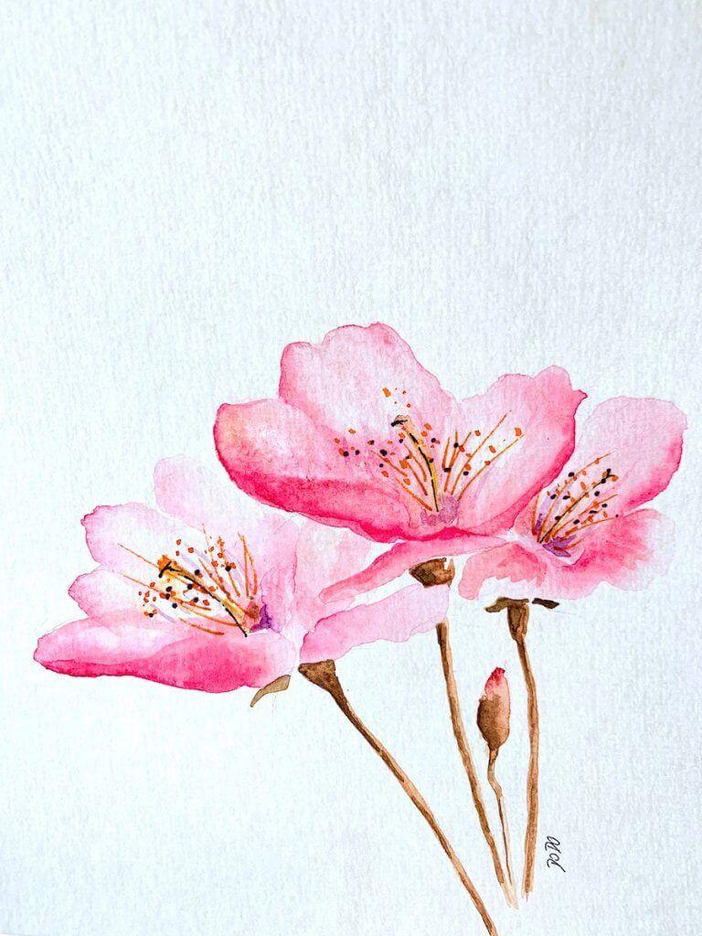 Aquarell Kirschblute Malen In 30 Minuten Watercolor Flowers