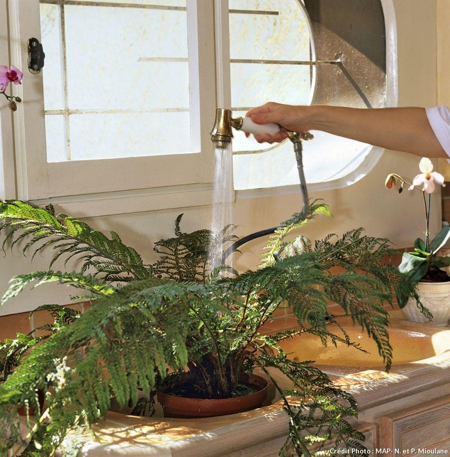 comment soigner ses plantes d 39 int rieur en hiver. Black Bedroom Furniture Sets. Home Design Ideas