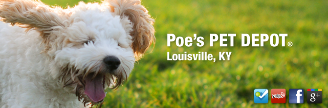 Poe S Pet Depot Louisville Ky Natural And Holistic Pet Food Pet Supplies And Pet Products Http Poespetdepot Com Food Animals Holistic Pet Pet Boarding