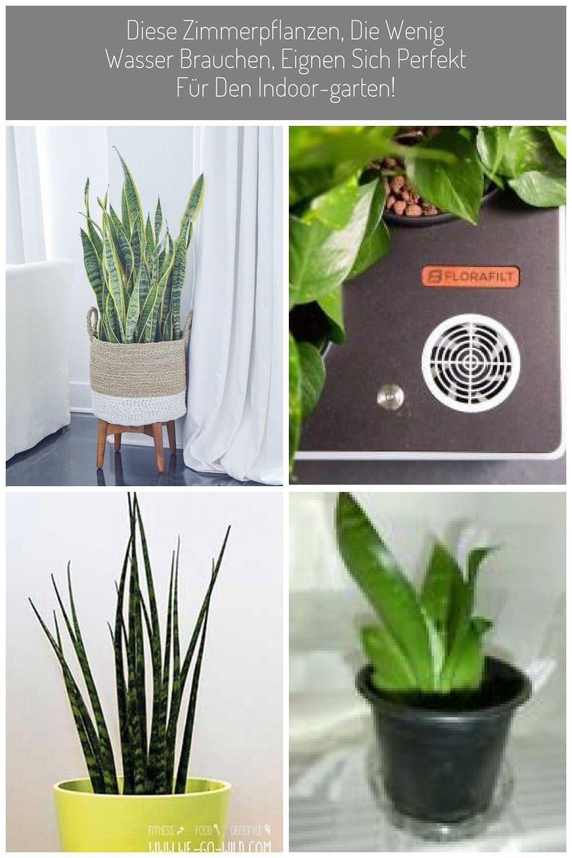 Diese Zimmerpflanzen Die Wenig Wasser Brauchen Eignen Sich Perfekt Fur Den Indoor Garten Grune Robustezimmerpflanz Pflanzen Zimmerpflanzen Garten Pflanzen