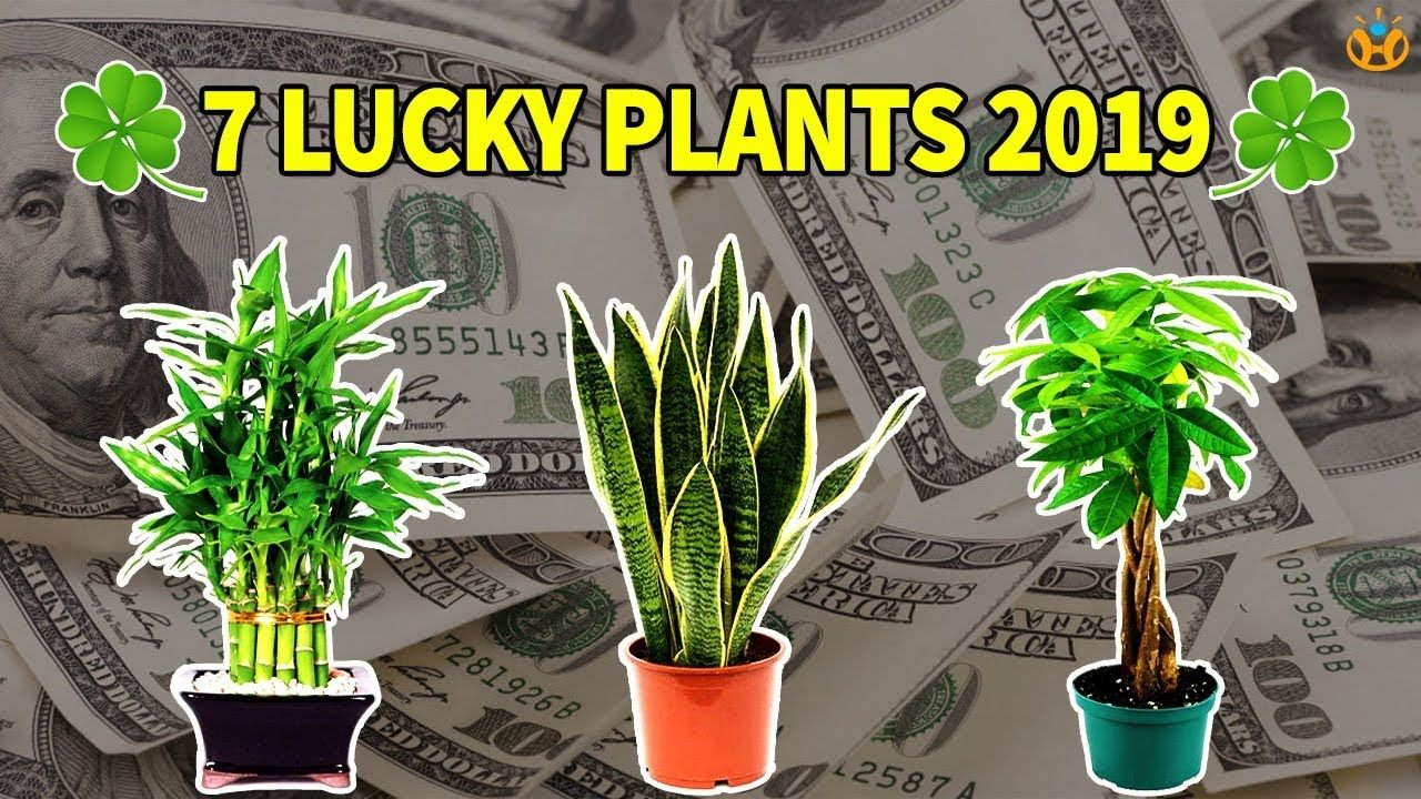 what brings good luck for money