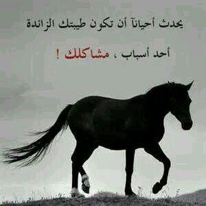 الطيبة الزائدة Horses Arabic Quotes More Than Words