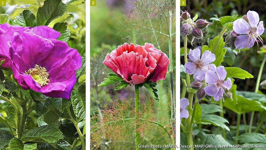 Jardin De Montagne Les Plantes Ideales A Cultiver En 2020 Cultiver Plante Jardins