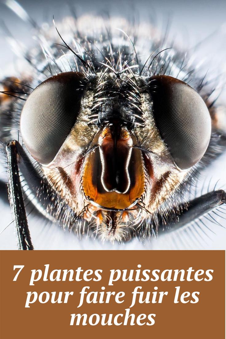 Faire Fuir Les Mouches : faire, mouches, Plantes, Puissantes, Faire, Mouches, Astuces, Grand, Mère, Mouches,, Chasser