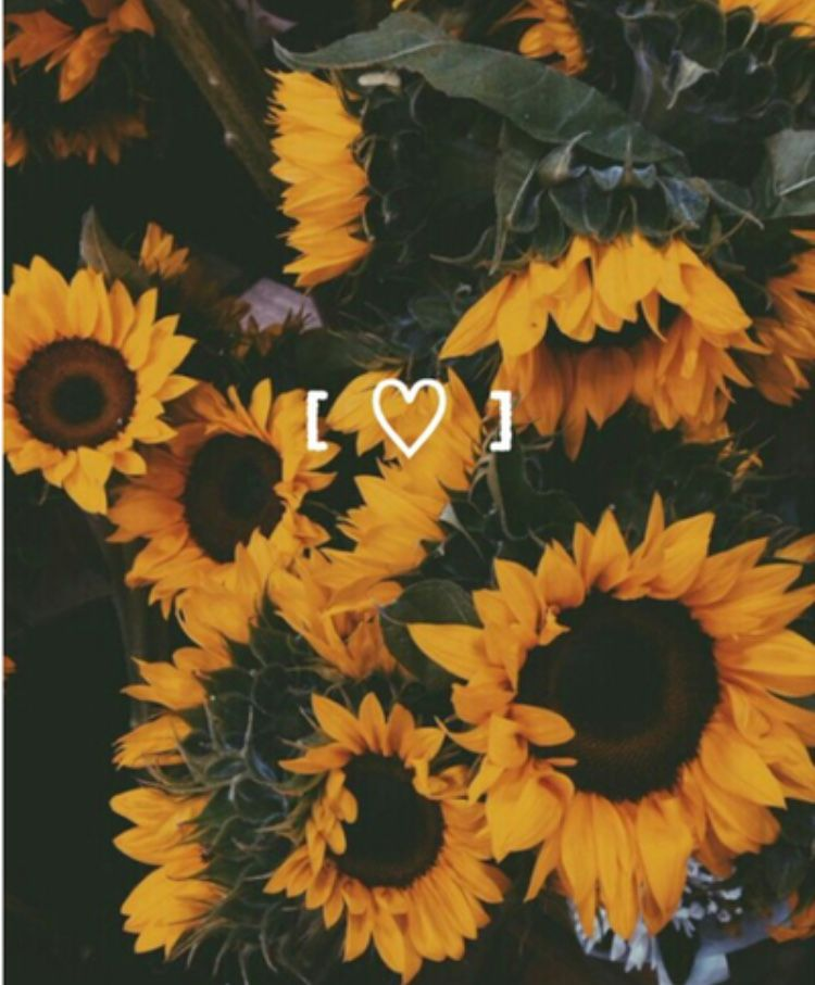 Pin By Nina Watson On Ideas To Take Pictures Sunflower Wallpaper Yellow Aesthetic Sunflower Photography