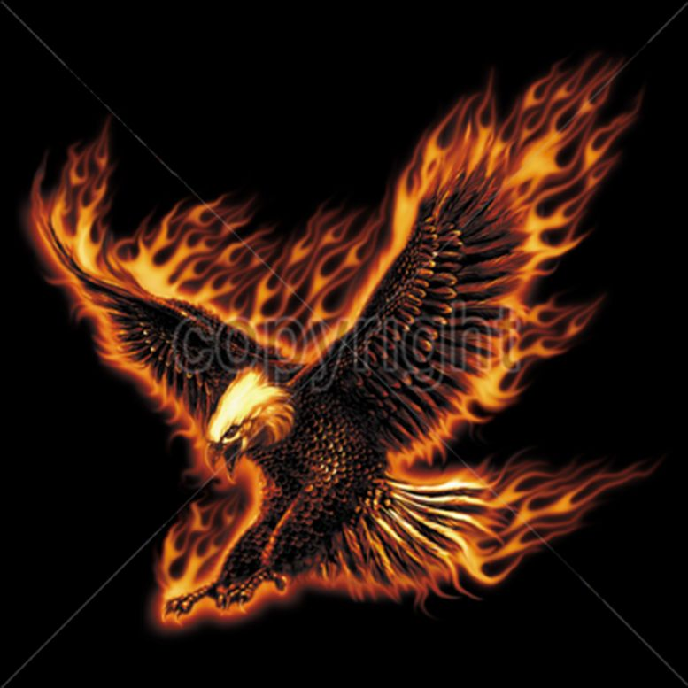 Pics Photos Eagle Flames Eagle Drawing Eagle Painting Eagle Pictures