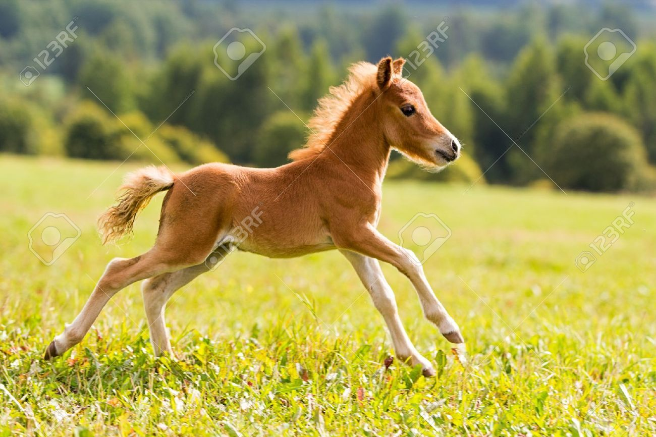 Falabella Horse Nature S Gifts Pinterest Falabella Horse Mini Pony And Horse