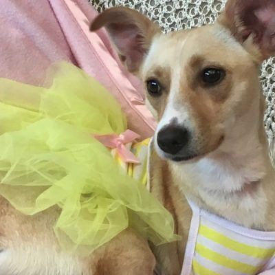 South Padre Island's Pet Rescuers