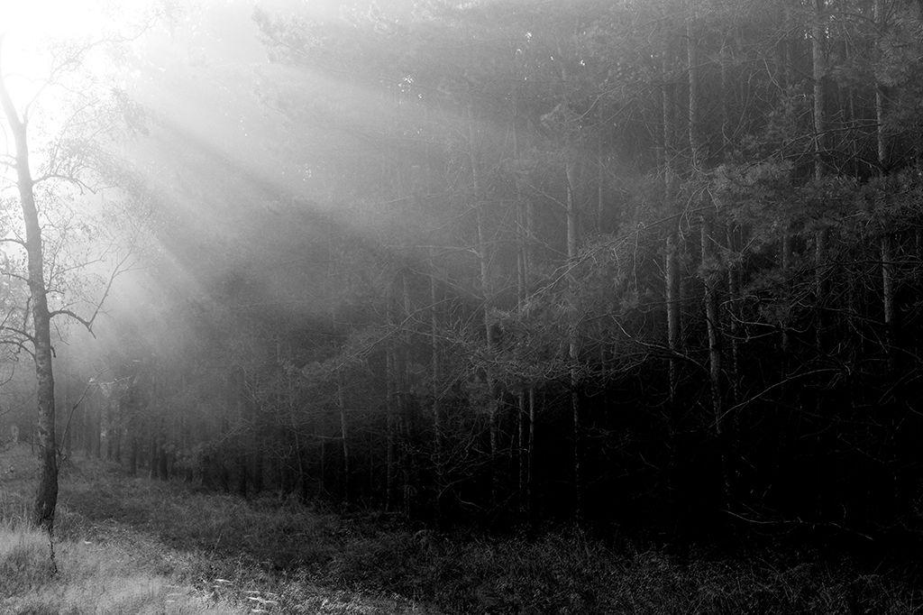 #boslicht #forest_light #nicobrandt