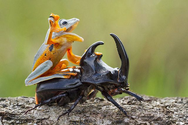 カエルとカブトムシ