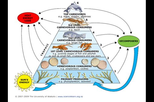 Aquatic example of the Trophic Levels Trophic level