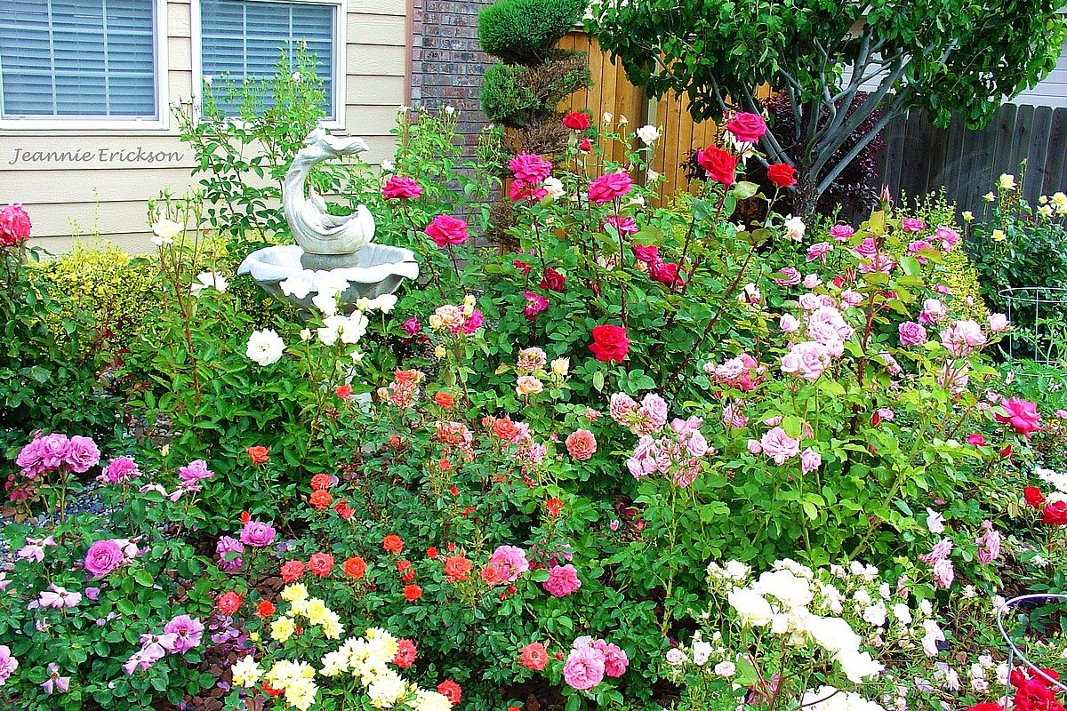 Grow A Small Rose Garden I Am Working On One Now But It Has A