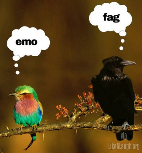 What birds think of each other