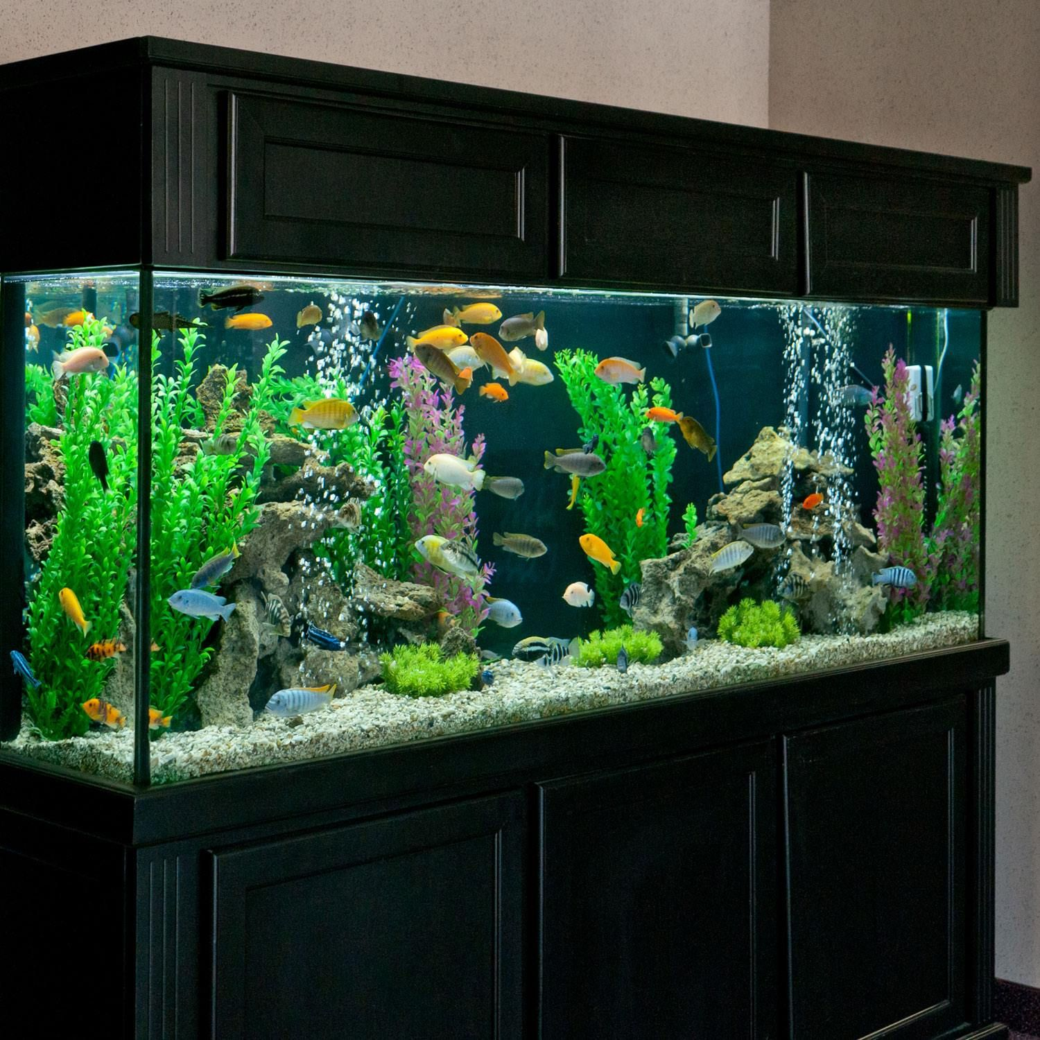 265 gallon african cichlid aquarium petsolutions african cichild office aquarium 265. Black Bedroom Furniture Sets. Home Design Ideas