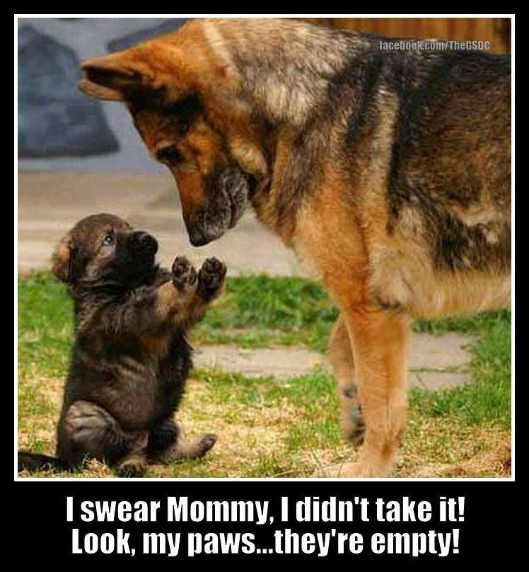 Image from http://funny-pics.co/wp-content/uploads/German-Shepard-Mother-and-Son.jpg.
