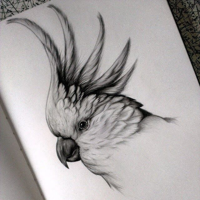 Detailed Black and White Wildlife Drawings