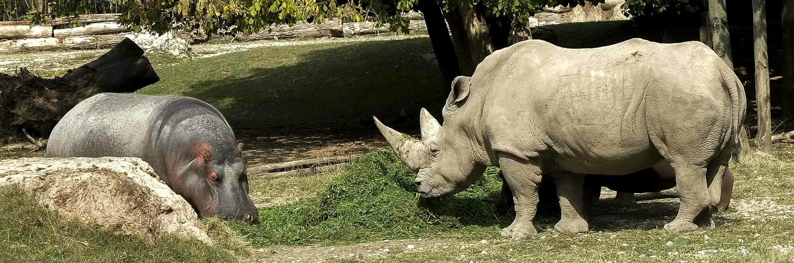 Rinoceronte al Parco Natura Viva