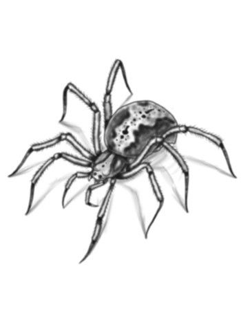 realistic spider drawing - Google Search | Spiders ...