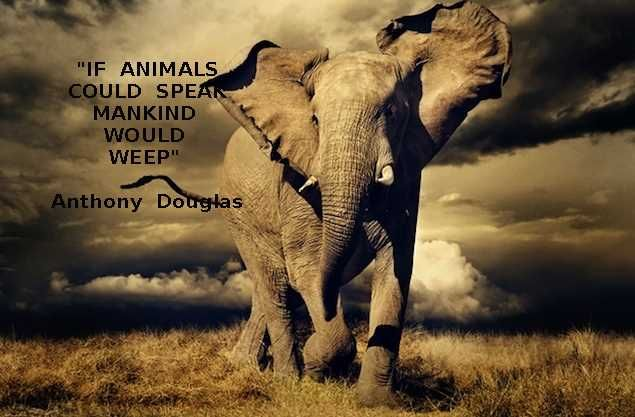 """""""If animals could speak mankind would weep"""" Anthony Douglas"""