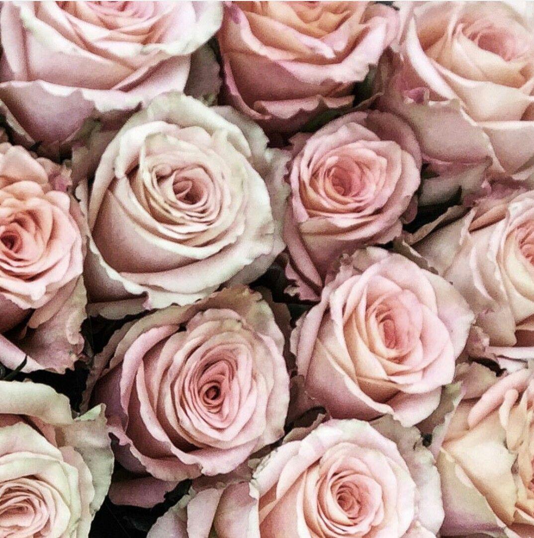 Love those Roses 💖