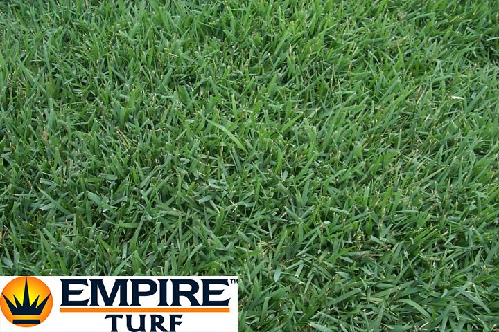 Empire Zoysia This Tropical Grass Is A Very Low Maintenance Variety It Requires Less Mowing As It Grows Slowly It Also Has A M Shade Grass Ground Cover Turf