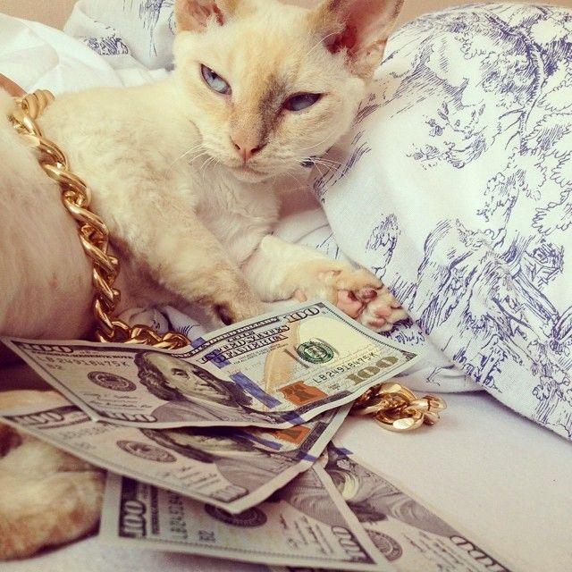 no rest 4 the wicked @ozimka #cashcats