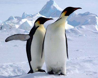 A List Of Animals That Start With E This Large Collection Of Animals Starting With E Contains The Meaning And An Ex Penguins Emperor Penguin Antarctic Animals