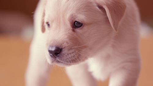 Un documental que promete: La vida secreta de los #perros © 2012 Oxford Scientific Films Ltd