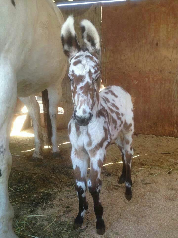 I want this baby mule