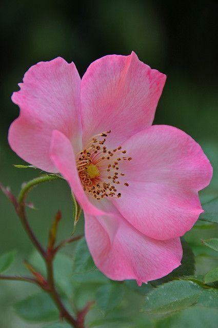 Simple Rose Garden: Outlook.com - Memcnijsten@hotmail.com