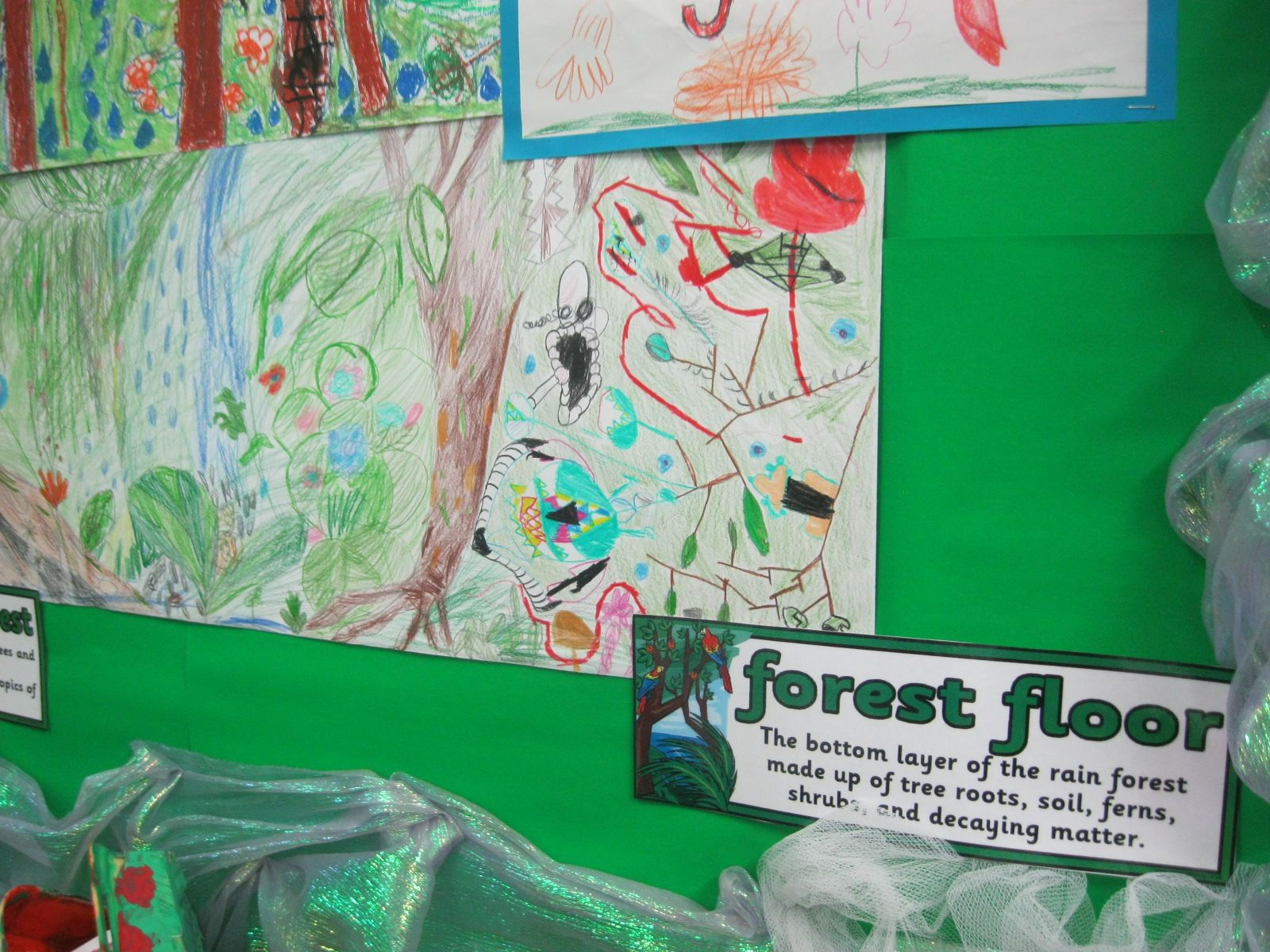 Forest Floor Year 3 Rainforest Topic