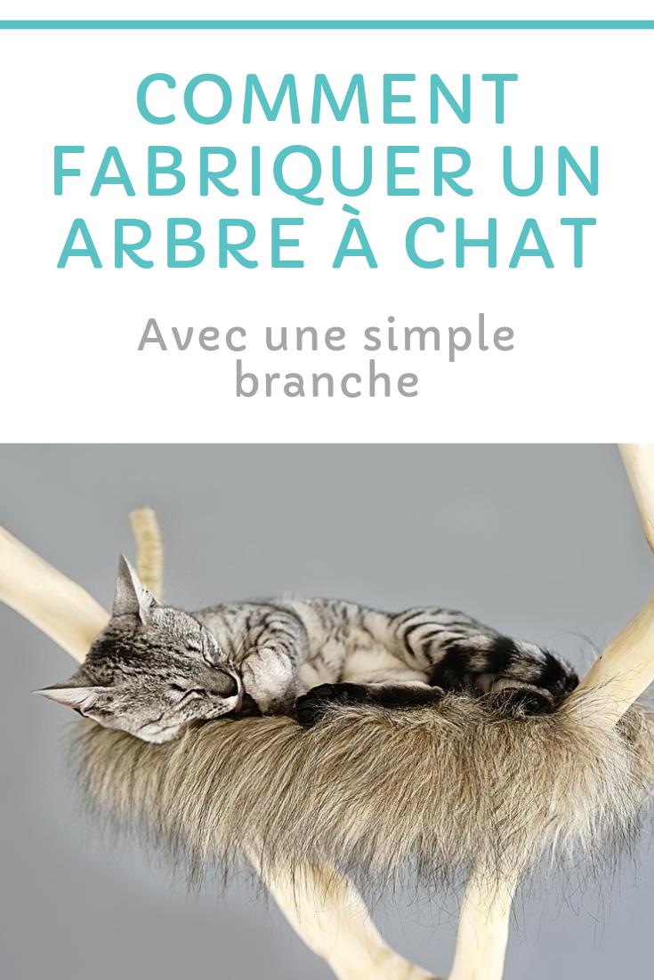 Comment Fabriquer Un Arbre À Chat Épinglé par j'aime les animaux sur chats (avec images