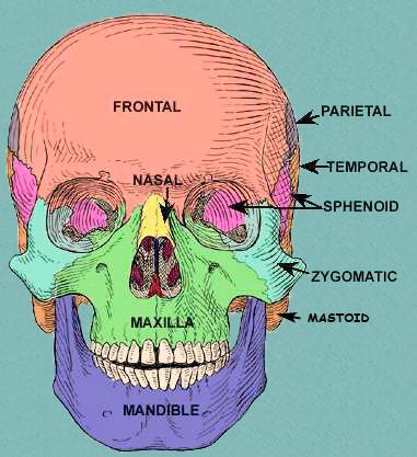 Neuroanatomy & Special Sense Understand 2nd year