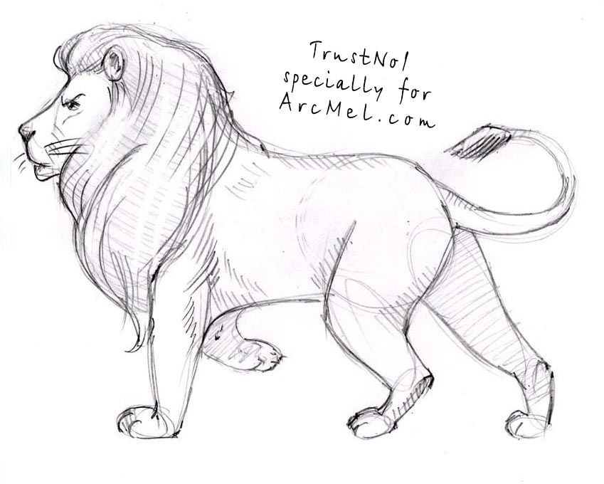 How To Draw A Lion Step By Step Lion Sketch Lion Drawing Animal Drawings