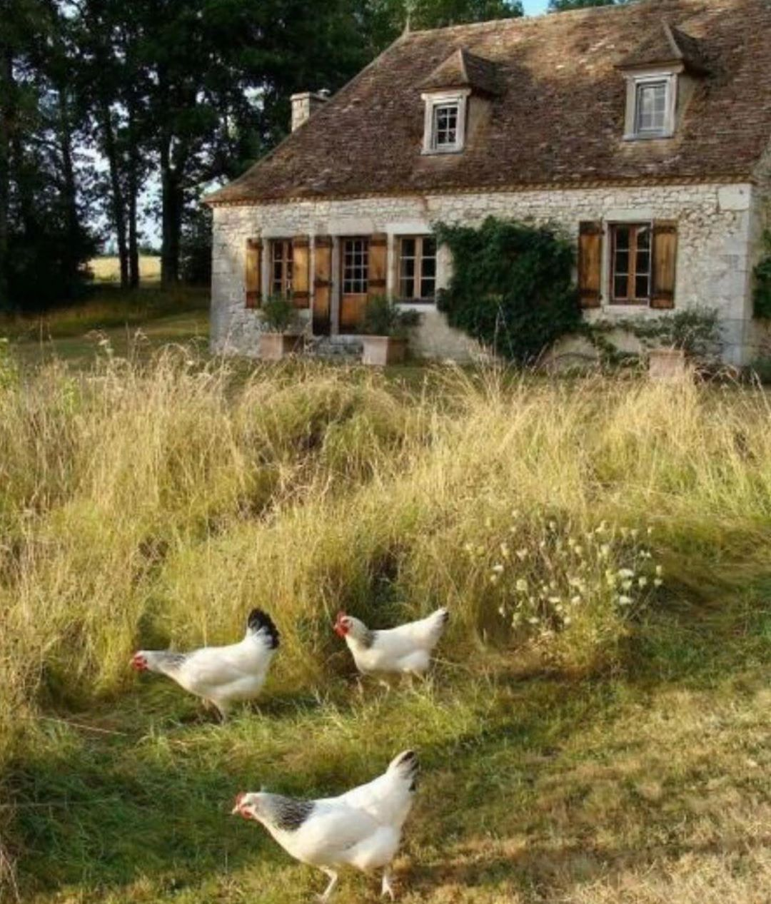 "Photo of TamraLea Romantic Living on Instagram: ""This French Country cottage tied at No. 7 favored 2019 post here on FrenchCountryPassion. #frenchcountrypassion#french…"""