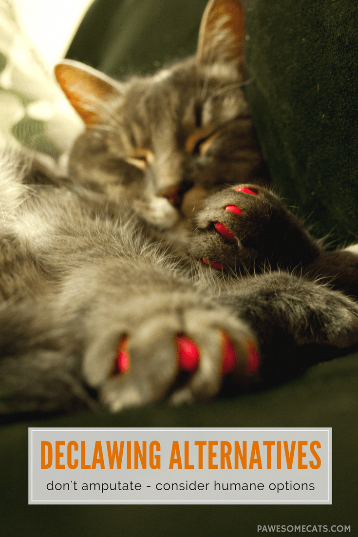 5 Alternatives To Declawing Cats With Images Declawing Cats Cat Care Cat Training