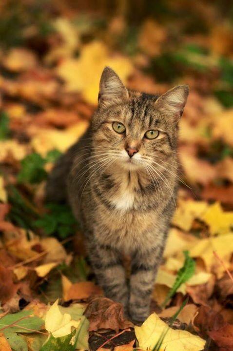 Les couleurs de l'automne | L'automne