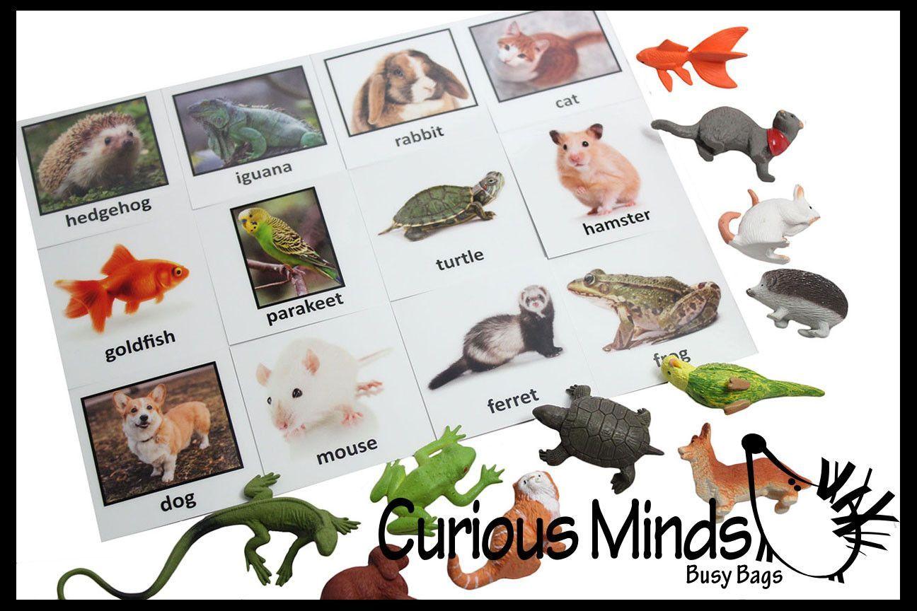 Montessori Pets Animal Object Match - Matching miniature pet animals to photo card. Montessori 3 part activity.
